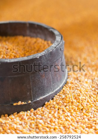 Close-up view of dried corn kernels. - stock photo