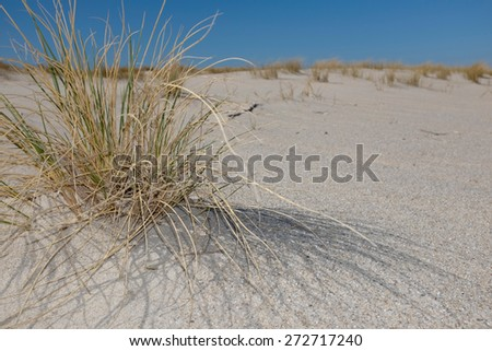 Close up view of dune grass on island of Sylt - stock photo