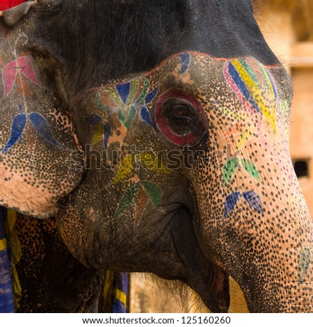 Close up view of elephant face, Jaipur, Rajasthan, India. - stock photo