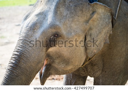Close up view of elephant head