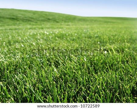 Close up view of field of fresh green grass - stock photo