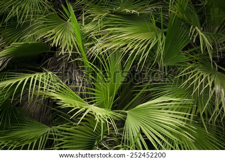 Close-up view of fresh green palm tree leaf - stock photo