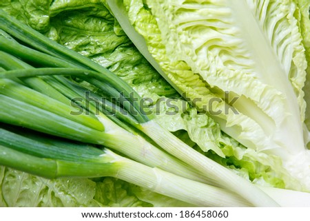 Close up view of fresh healthy uncooked leaks and Chinese cabbage for a tasty accompaniment to a meal or vegetarian cuisine - stock photo