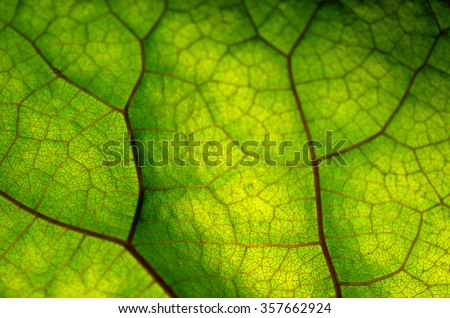 Close up view of green leaf and veins - stock photo