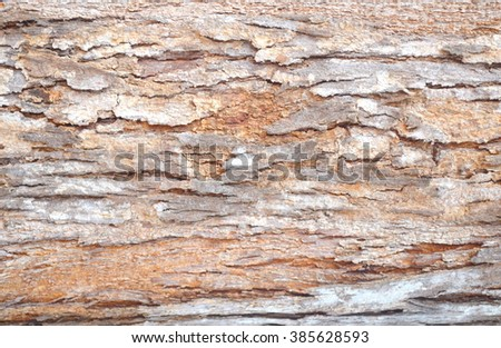 Close-up view of highly detailed tree bark texture. Nature wood background. Seamless texture pattern from old cracked bark. Ancient and weathered brown tree bark filling the frame.