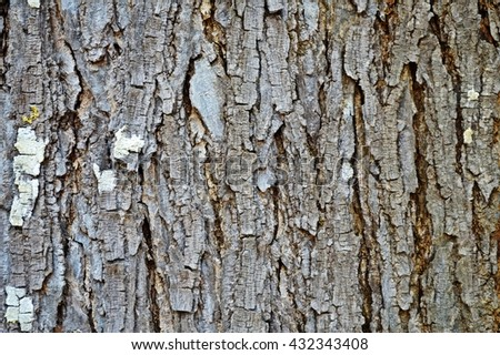 Close-up view of highly detailed tree bark texture. Nature wood background. Seamless texture pattern from old cracked bark. Ancient and weathered brown tree bark filling the frame. - stock photo