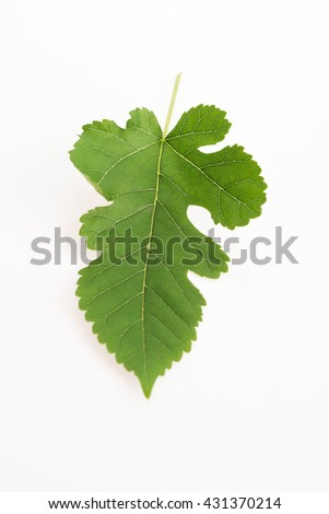 Close-up view of Mulberry leaf over white background