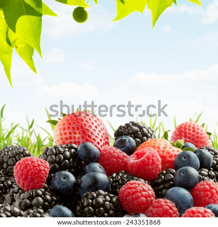 close up view of nice fresh berries on color  background - stock photo