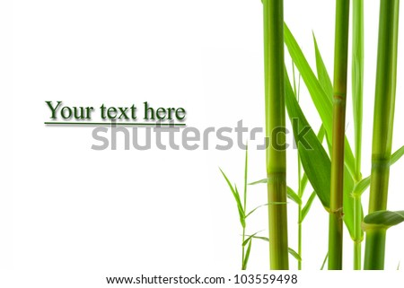 close up view of nice fresh leaf on white  back. banner - stock photo