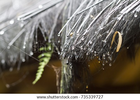 Close Up View Of Raindrops And Straw Roof Material Of A Traditional Hut