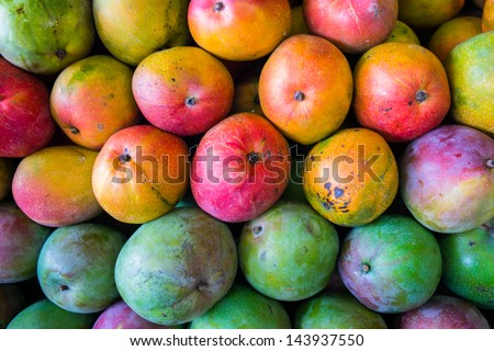 Close up view of ripe Florida mangoes. - stock photo