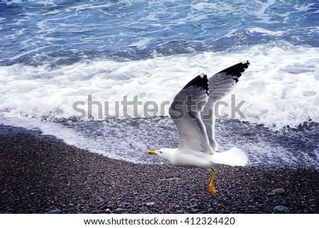 Close up view of seagull on the beach against natural blue and white water background. Sea Bird flying.  A flying seagull in nature near the sea. - stock photo