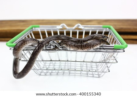 close up view of snake - stock photo