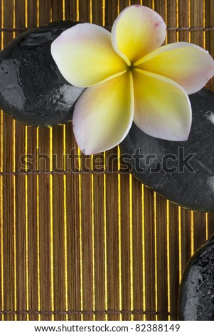 close up view of stones  and flower  on color back - stock photo