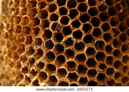 Close up view of the details of an empty wasp nest. - stock photo
