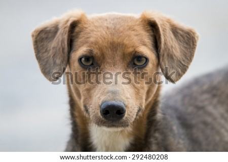 Close up view of the head of cute domestic dog. - stock photo