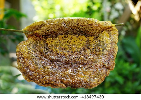 Close up view of the honeycomb with sweet honey. Honey is beekeeping healthy produce. Bee honey collected in the yellow beautiful honeycomb  - stock photo