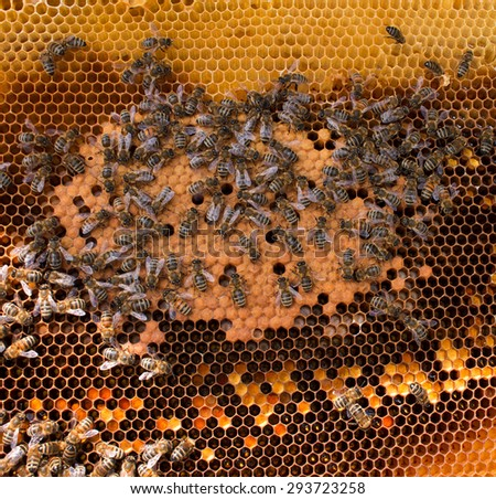 Close up view of the working bees on honeycomb - stock photo
