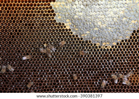 Close up view of the working bees on honeycomb