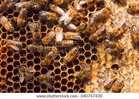 Close up view of the working bees on the honeycomb with sweet honey. Honey is beekeeping healthy produce. Bee honey collected in the yellow beautiful honeycomb. - stock photo