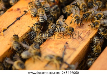 Close up view of the working bees-Soft focus - stock photo