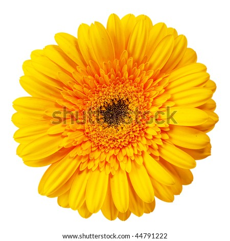 close up view of the yellow daisy