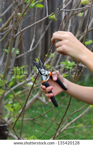Close up view of two hands using a trimmer to trim a tree - stock photo