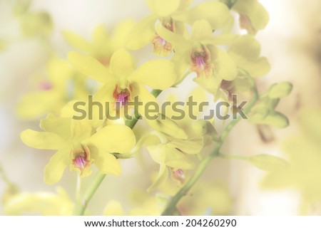 Close up view of vibrant yellow tropical orchid in soft focus