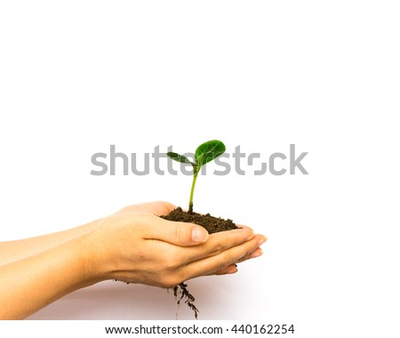Close-up view of woman hands holding green young plant with soil over isolated white background. Green spout for save/safe conservation environment. Clean ecosystem and carbon responsibility concept.