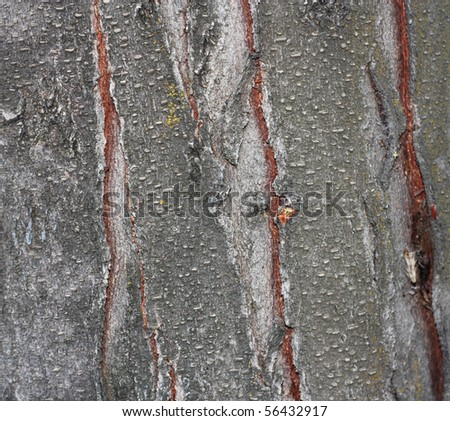 Close up view of wood. Good natural background - stock photo
