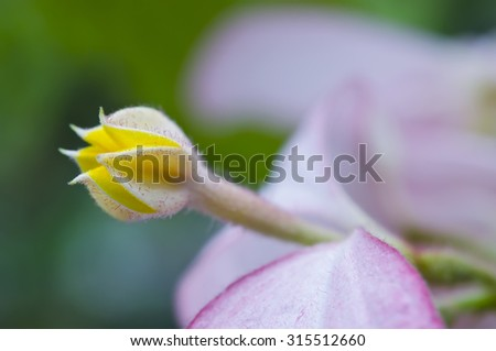 Close-up view of Yellow flower in Bangkok Thailand (Selective focus) - stock photo