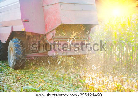 close up view on combine harvester in time of harvesting corn rear view agriculture concept  - stock photo