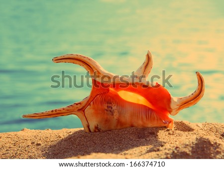 close-up view on orange seashell and sea - vintage retro style - stock photo