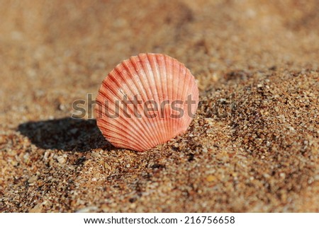 Close-up view on seashells on beach/Seashell on the sand blurred