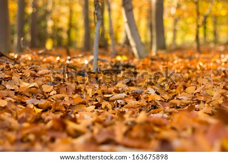 Close up view on the ground covered with fallen golden oak leaves - stock photo