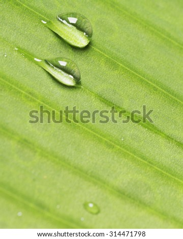 Close up water drops on green leaf after raining with shallow depth of field - stock photo