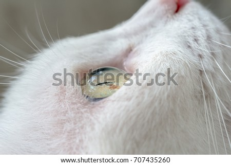 Close up white cat's eye