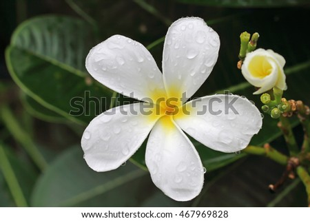 close up white flower in the rain
