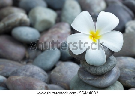 Close up white frangipani and therapy stones