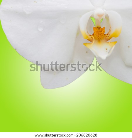 Close up white orchid with green background