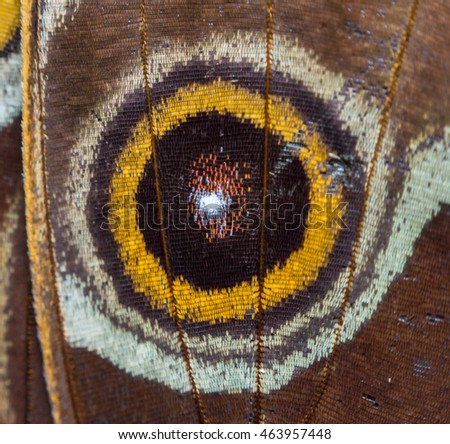 Close up with a lot of detail of a wing of a butterfly