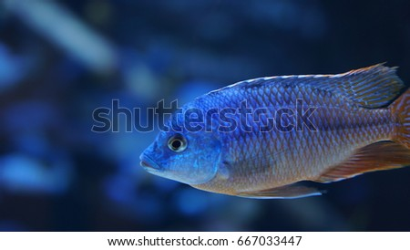 close up with tropical fish