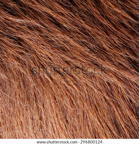 Close up wolf fur texture - stock photo