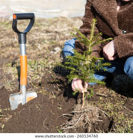 Close up woman plants a small fir-tree outdoors - stock photo
