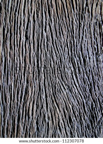 Close Up Wood - stock photo
