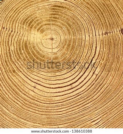 close-up wooden cut texture - stock photo