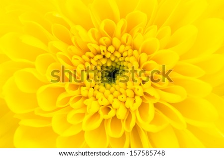 Close-up Yellow flower - stock photo