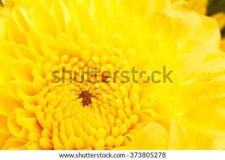 Close-up Yellow flower - stock photo