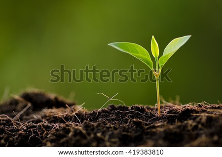 Close up Young plant growing over green background and morning sunlight environment