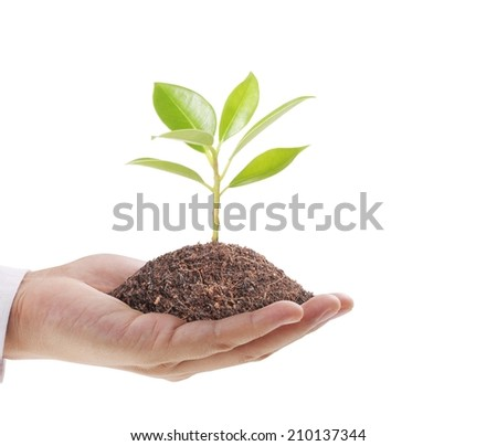 Close upman hands holding plant - stock photo